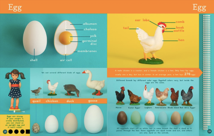 celebrate-picture-books-picture-book-review-now-you-know-what-you-eat-egg