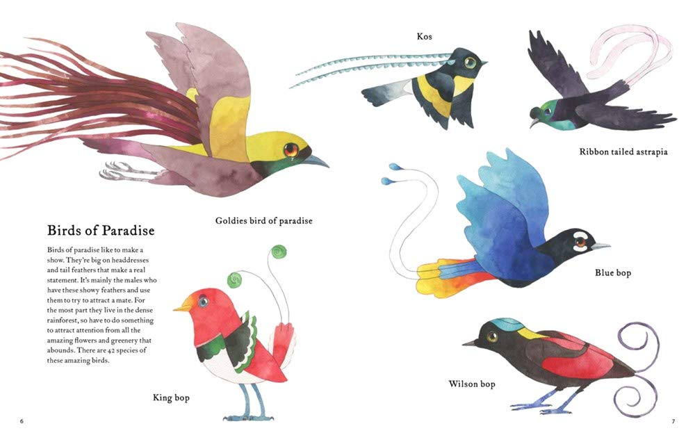celebrate-picture-books-picture-book-review-the-atlas-of-amazing-birds-birds-of-paradise