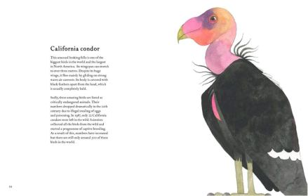 celebrate-picture-books-picture-book-review-the-atlas-of-amazing-birds-condor