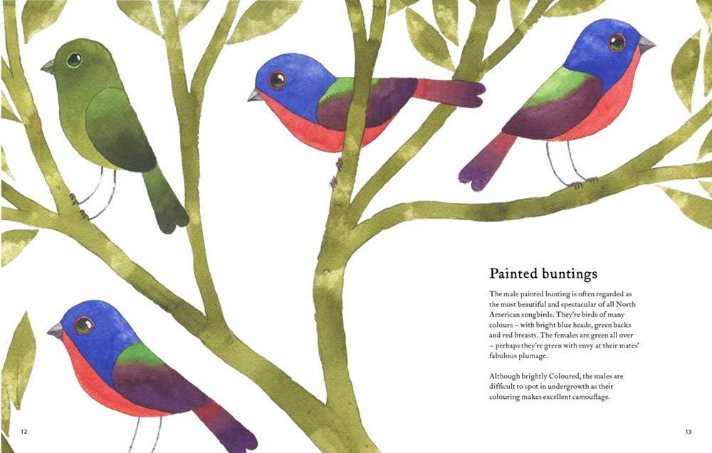 celebrate-picture-books-picture-book-review-the-atlas-of-amazing-birds-painted-buntings