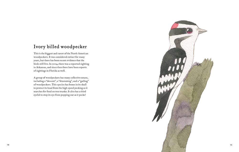 celebrate-picture-books-picture-book-review-the-atlas-of-amazing-birds-woodpecker