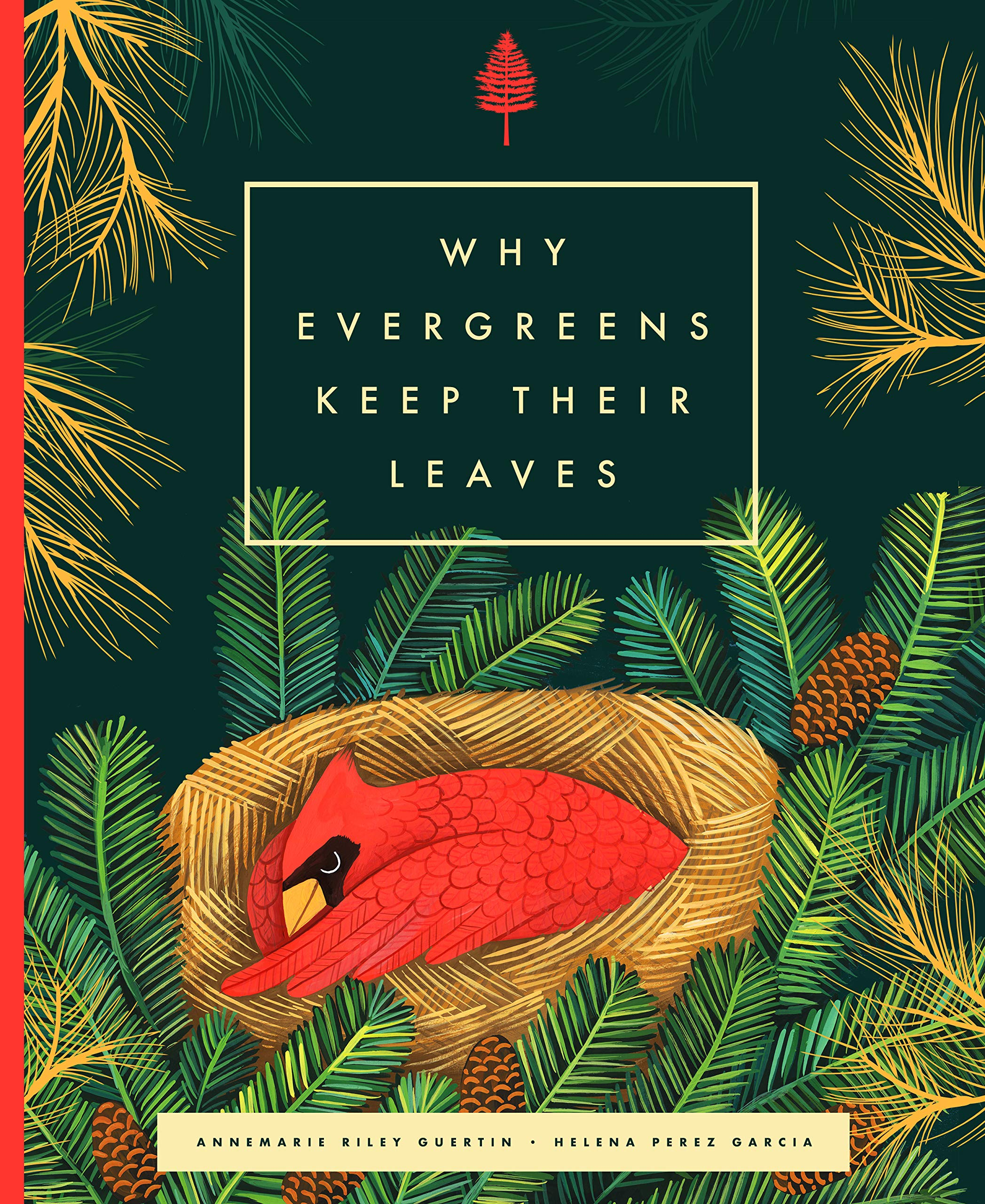 celebrate-picture-books-picture-book-review-why-evergreens-keep-their-leaves-cover