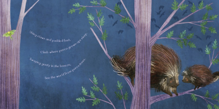 celebrate-picture-books-picture-book-review-you-are-mine-porcupine-tree
