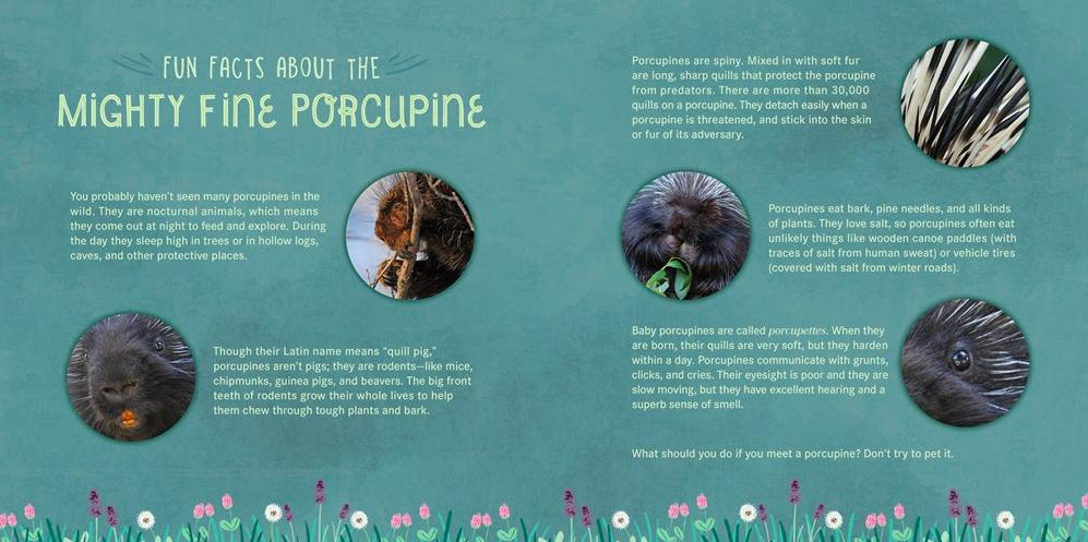 celebrate-picture-books-picture-book-review-you-are-mine-porcupine-back-matter