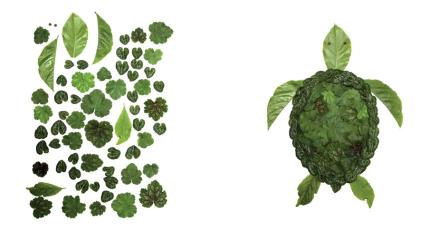 celebrate-picture-books-picture-book-review-leafy-critters-turtle