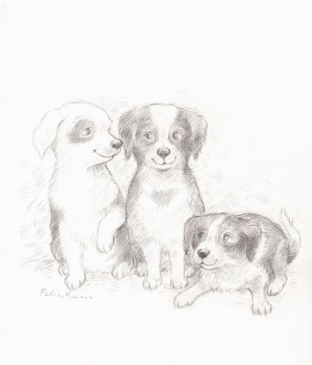 celebrate-picture-books-picture-book-review-Petra-Brown-interview-dog-drawing