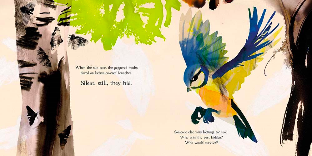 celebrate-picture-books-picture-book-review-moth-bird