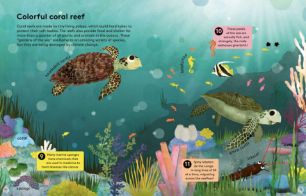celebrate-picture-books-picture-book-review-50-reasons-to-love-animals-coral-reef