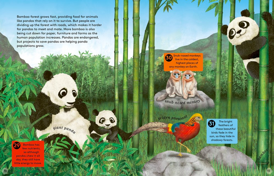 celebrate-picture-books-picture-book-review-50-reasons-to-love-animals-pandas