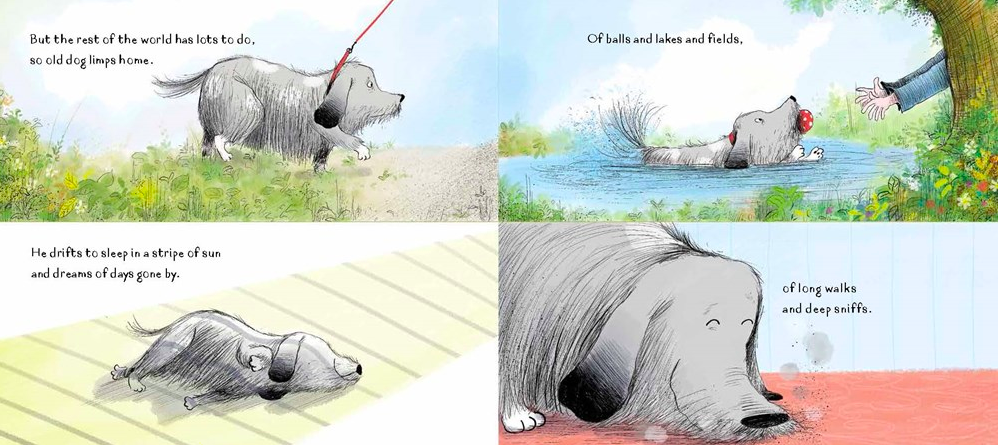 celebrate-picture-books-picture-book-review-this-old-dog-dreams