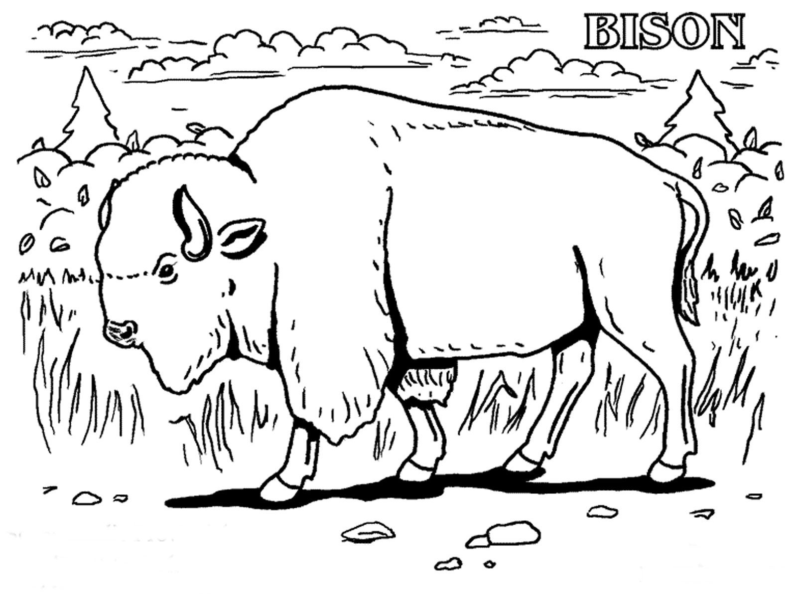 celebrate-picture-books-picture-book-review-bison-coloring-page