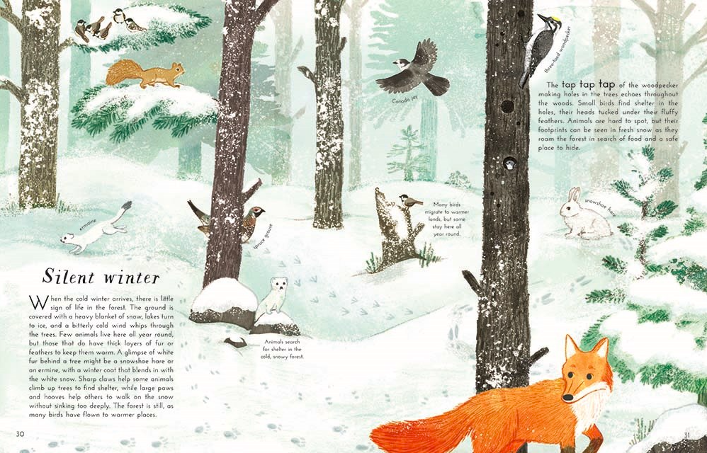 celebrate-picture-books-picture-book-review-into-the-forest-winter