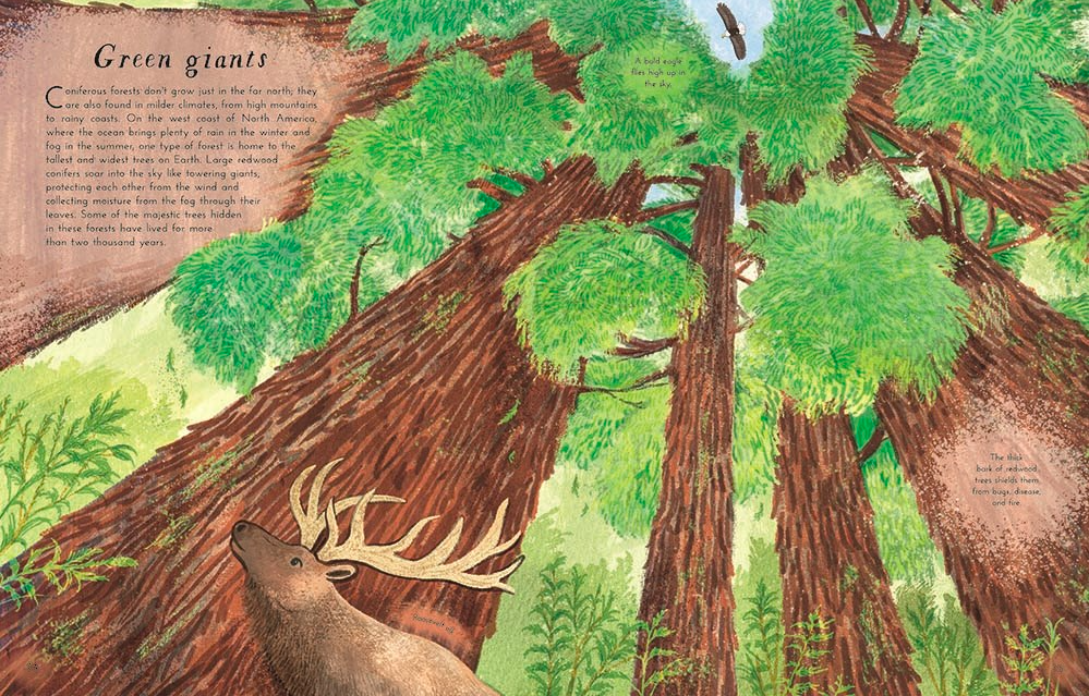 celebrate-picture-books-picture-book-review-into-the-forest-redwoods