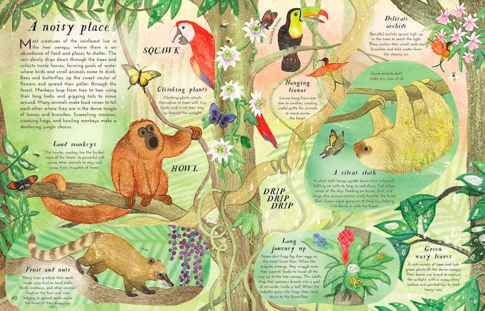 celebrate-picture-books-picture-book-review-into-the-forest-rainforest