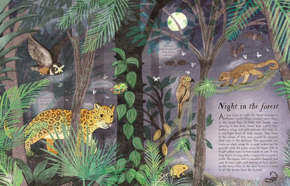celebrate-picture-books-picture-book-review-into-the-forest-night