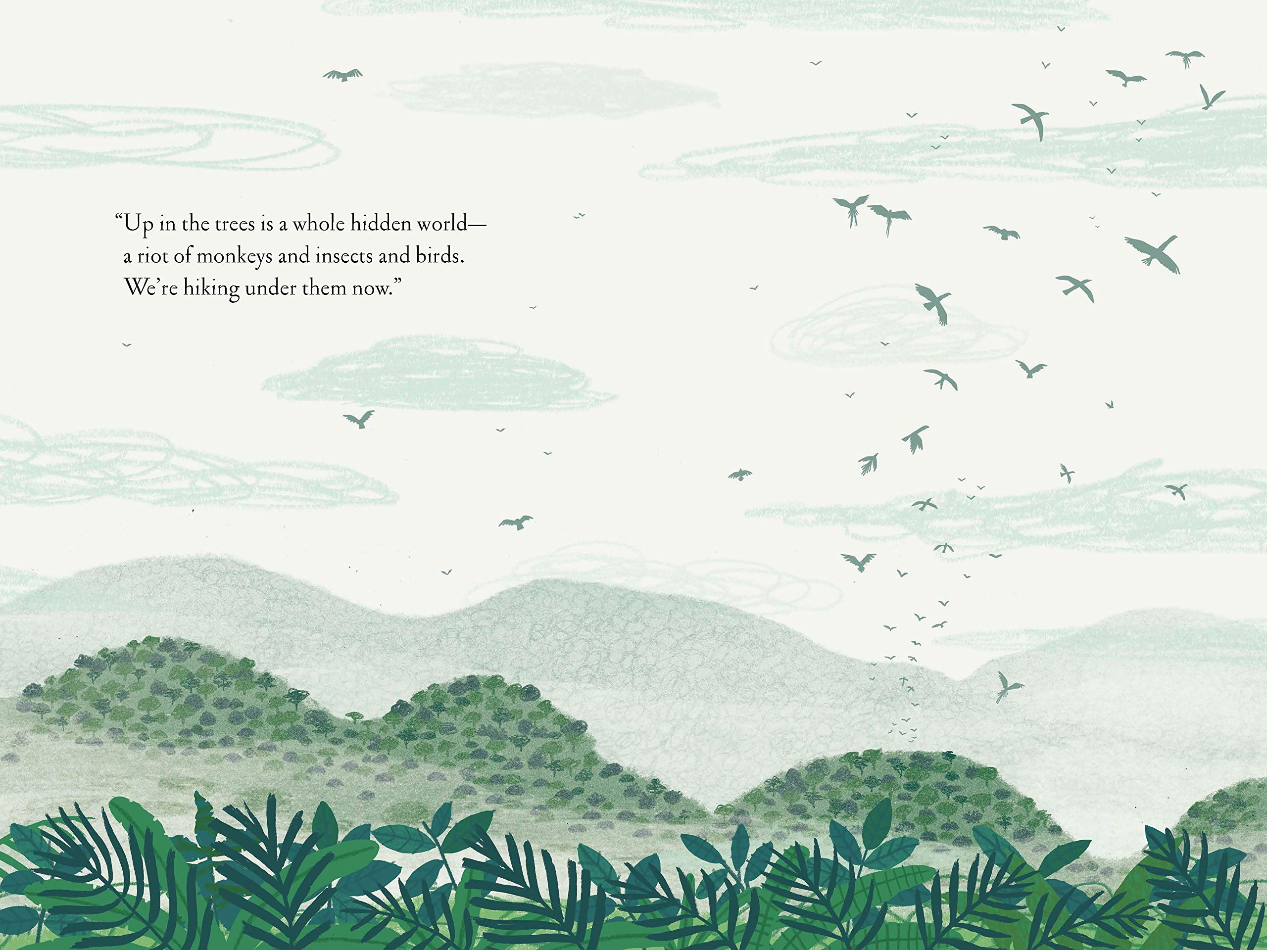 celebrate-picture-books-picture-book-review-over-and-under-the-rainforest-birds