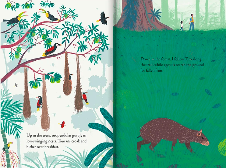 celebrate-picture-books-picture-book-review-over-and-under-the-rainforest-toucans