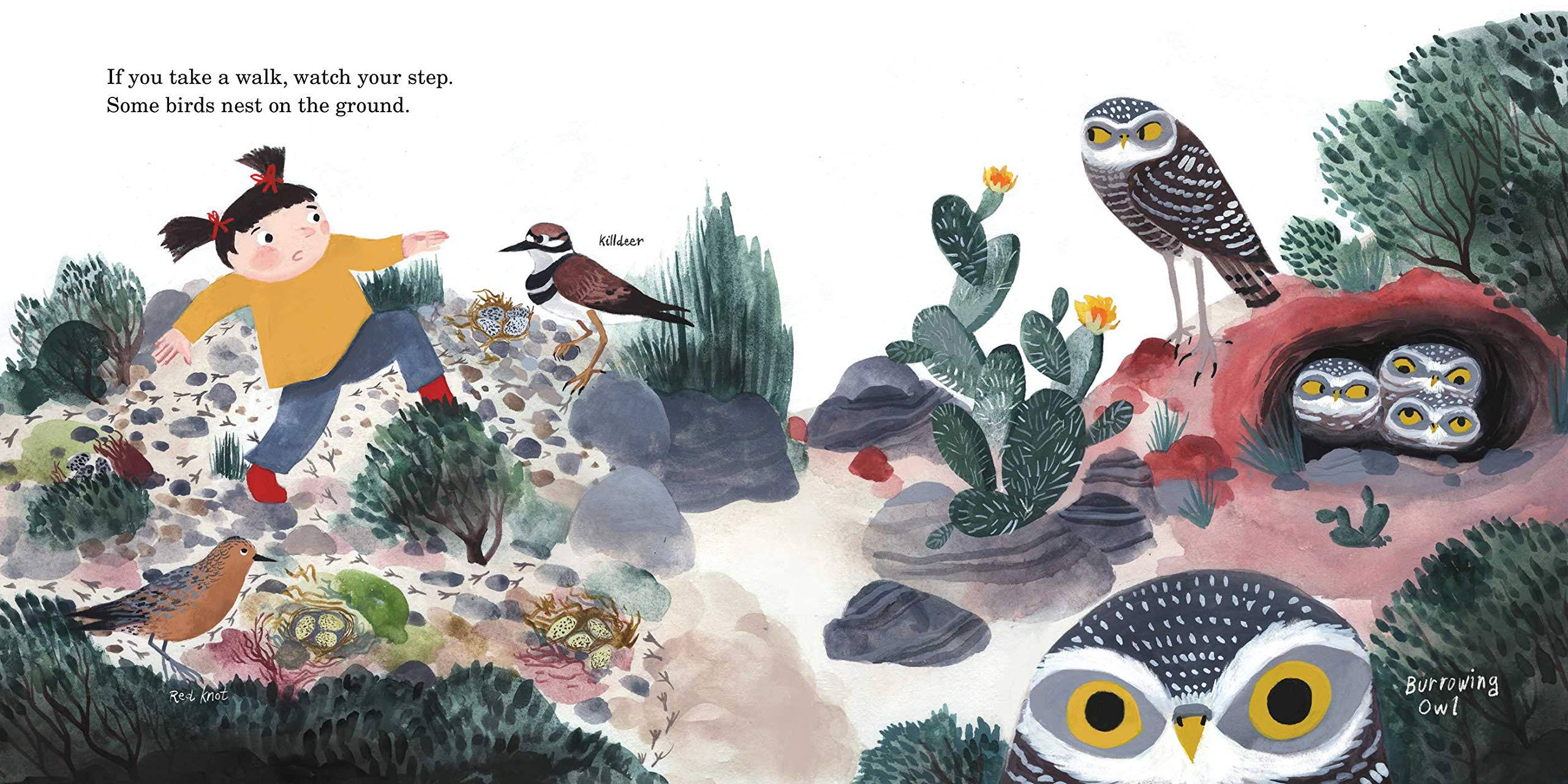 celebrate-picture-books-picture-book-review-how-to-find-a-bird-desert