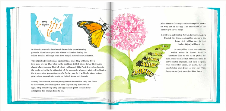 celebrate-picture-books-picture-book-review-butterflies-belong-here-migration