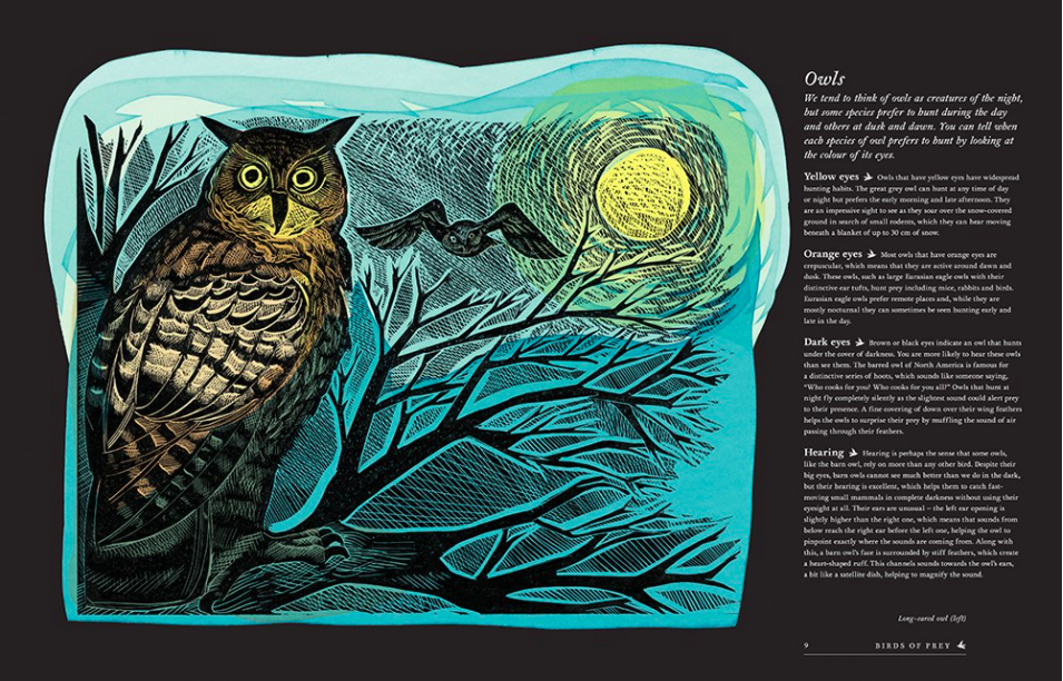 celebrate-picture-books-picture-book-review-birds-explore-their-extraordinary-world-owls