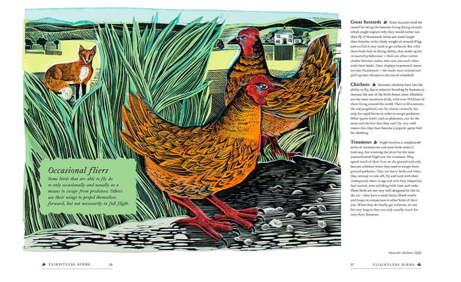 celebrate-picture-books-picture-book-review-birds-explore-their-extraordinary-world-chickens
