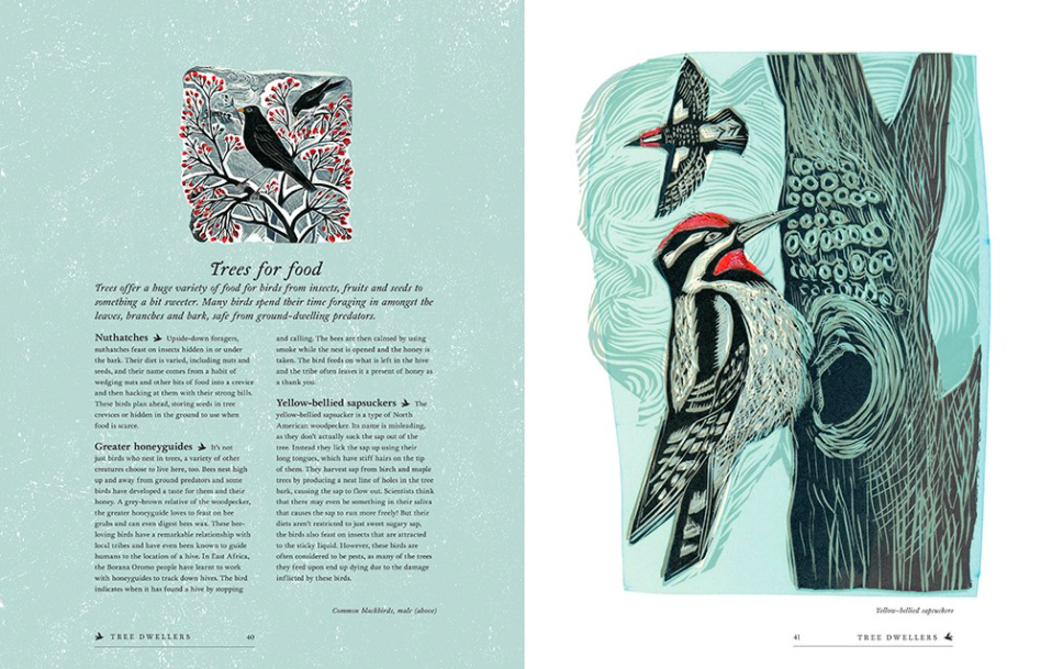 celebrate-picture-books-picture-book-review-birds-explore-their-extraordinary-world-woodpeckers