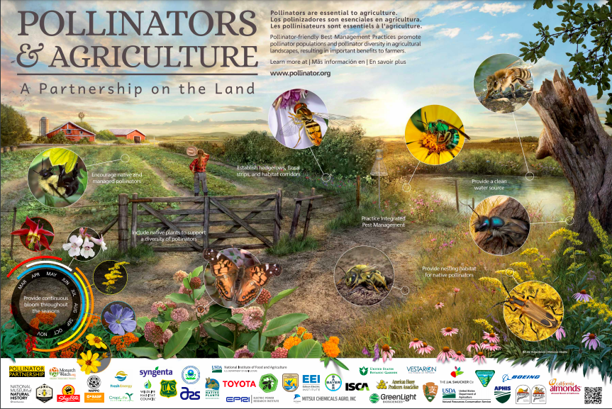 celebrate-picture-books-picture-book-review-how-to-build-an-insect-pollinators-poster