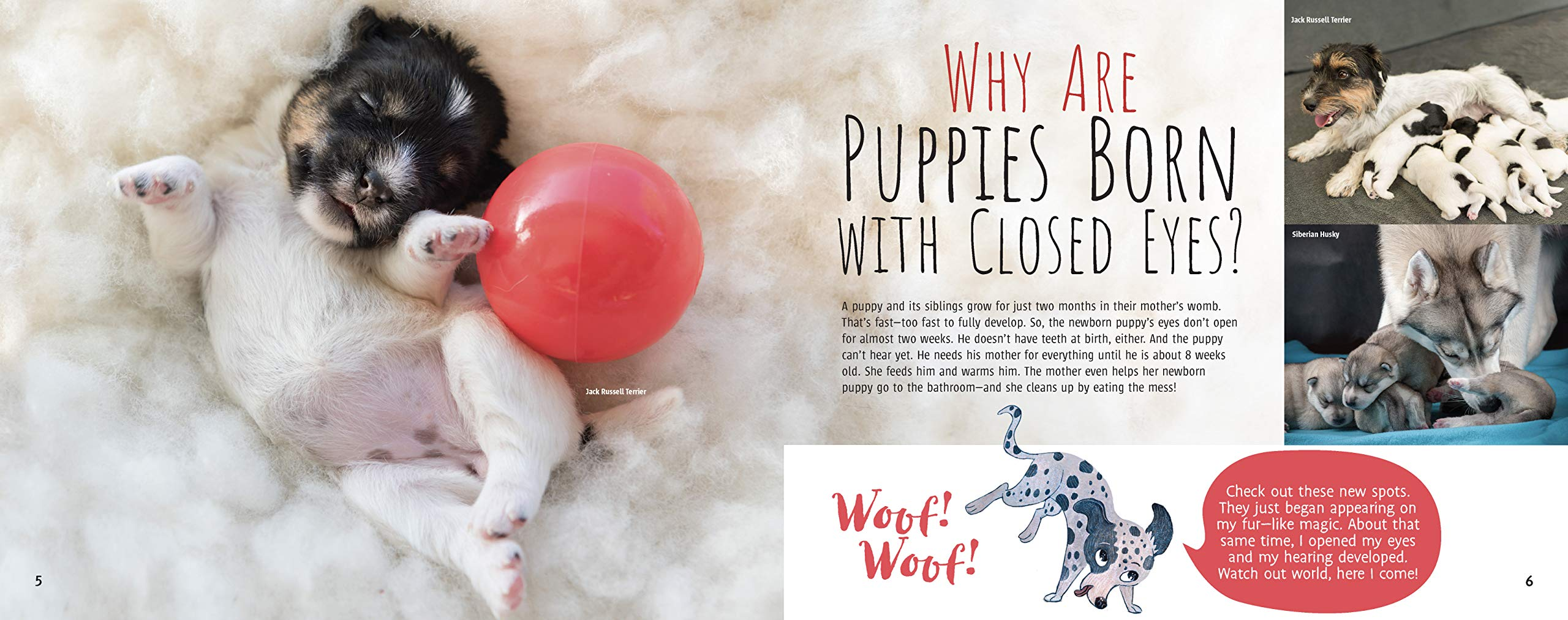 celebrate-picture-books-picture-book-review-woof!-the-truth-about-dogs-puppies