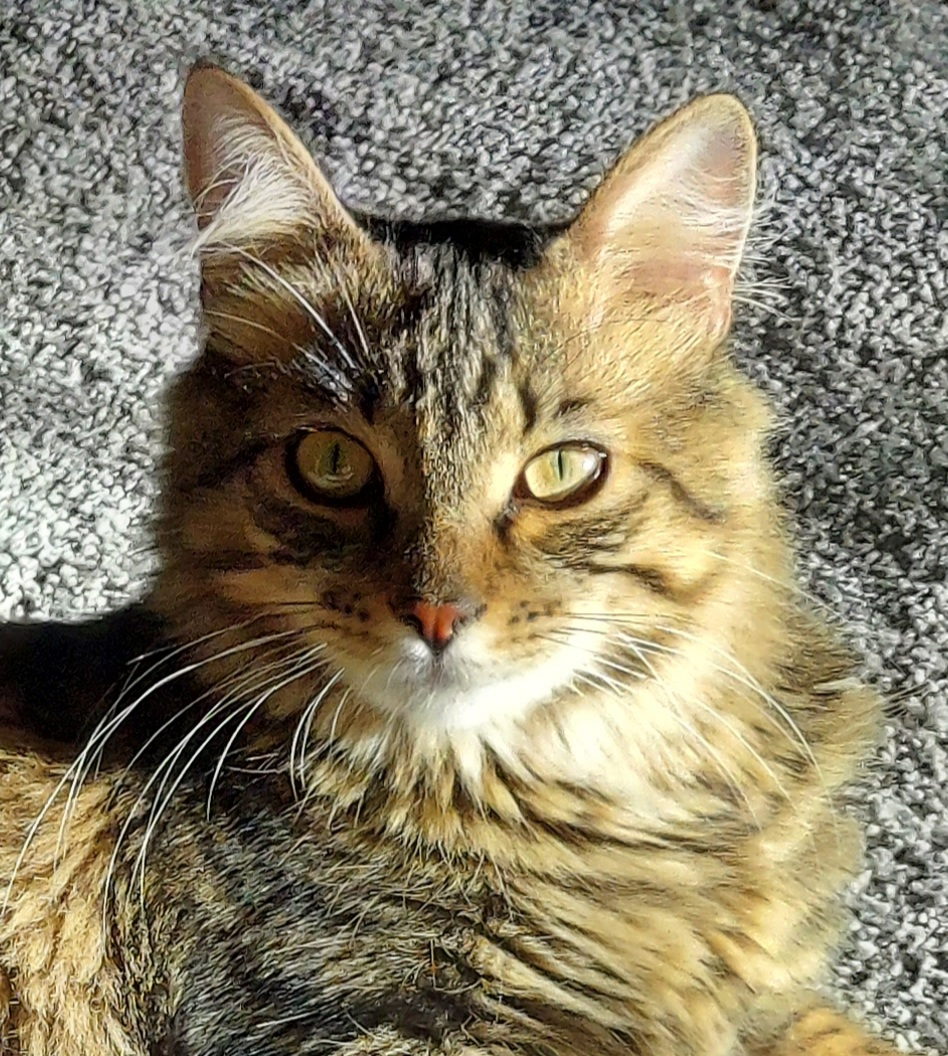 celebrate-picture-books-picture-book-review-p-is-for-purr-Simon-headshot