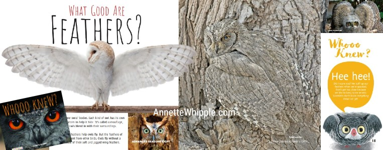celebrate-picture-books-picture-book-review-whooo-knew-owl-camouflage